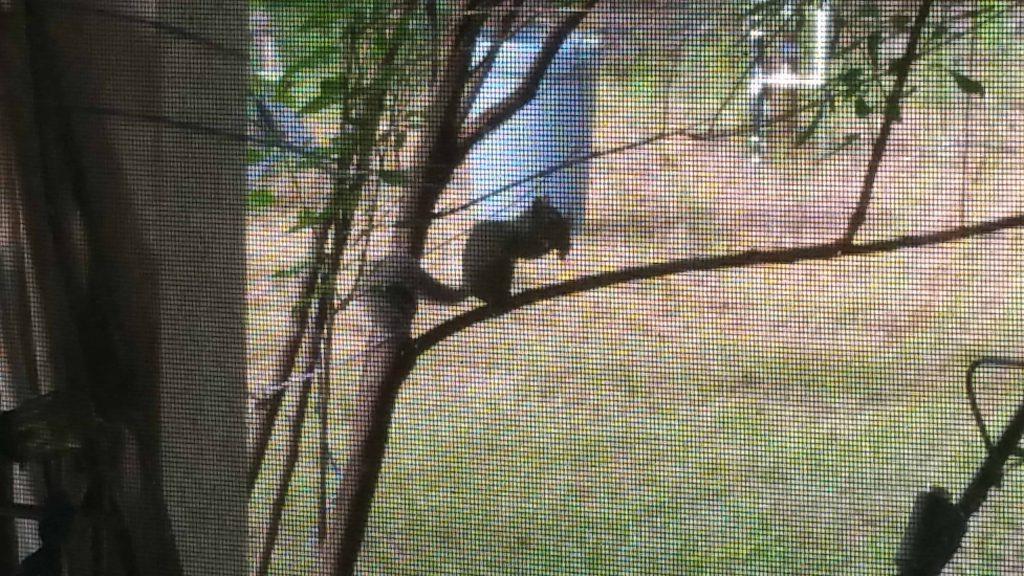 Squirrel - December 6, 2017 - 1