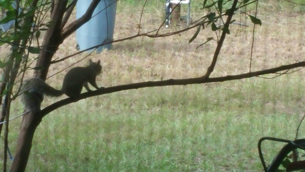Squirrel - December 6, 2017 - 3