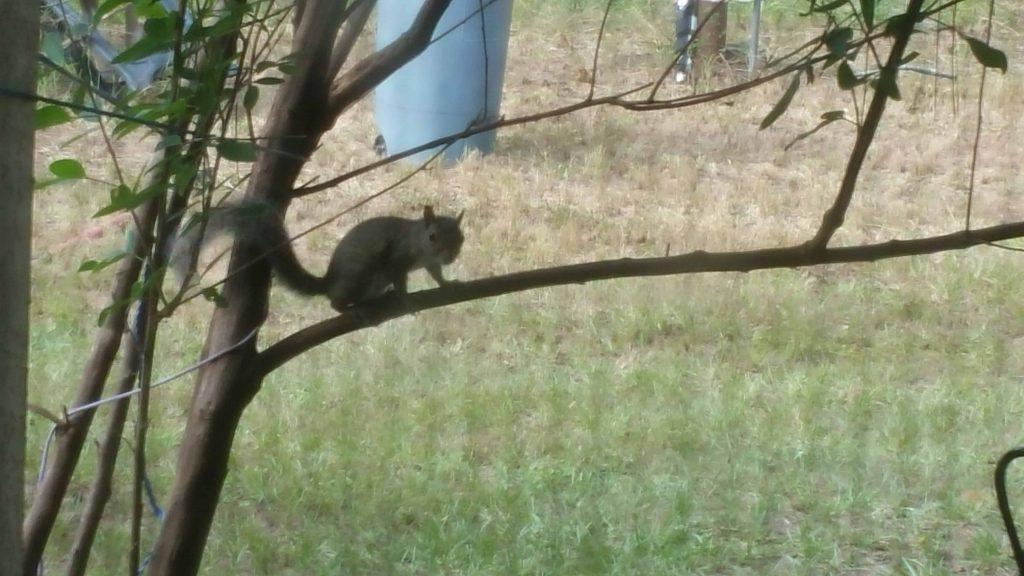 Squirrel - December 6, 2017 - 4