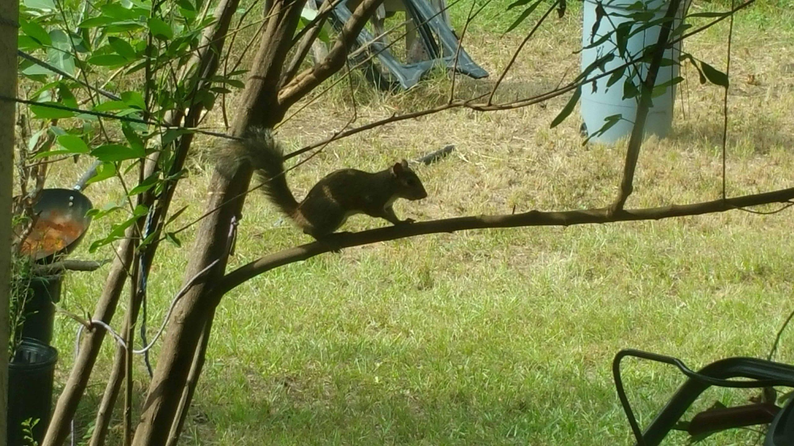 Squirrel - December 6, 2017 - 7