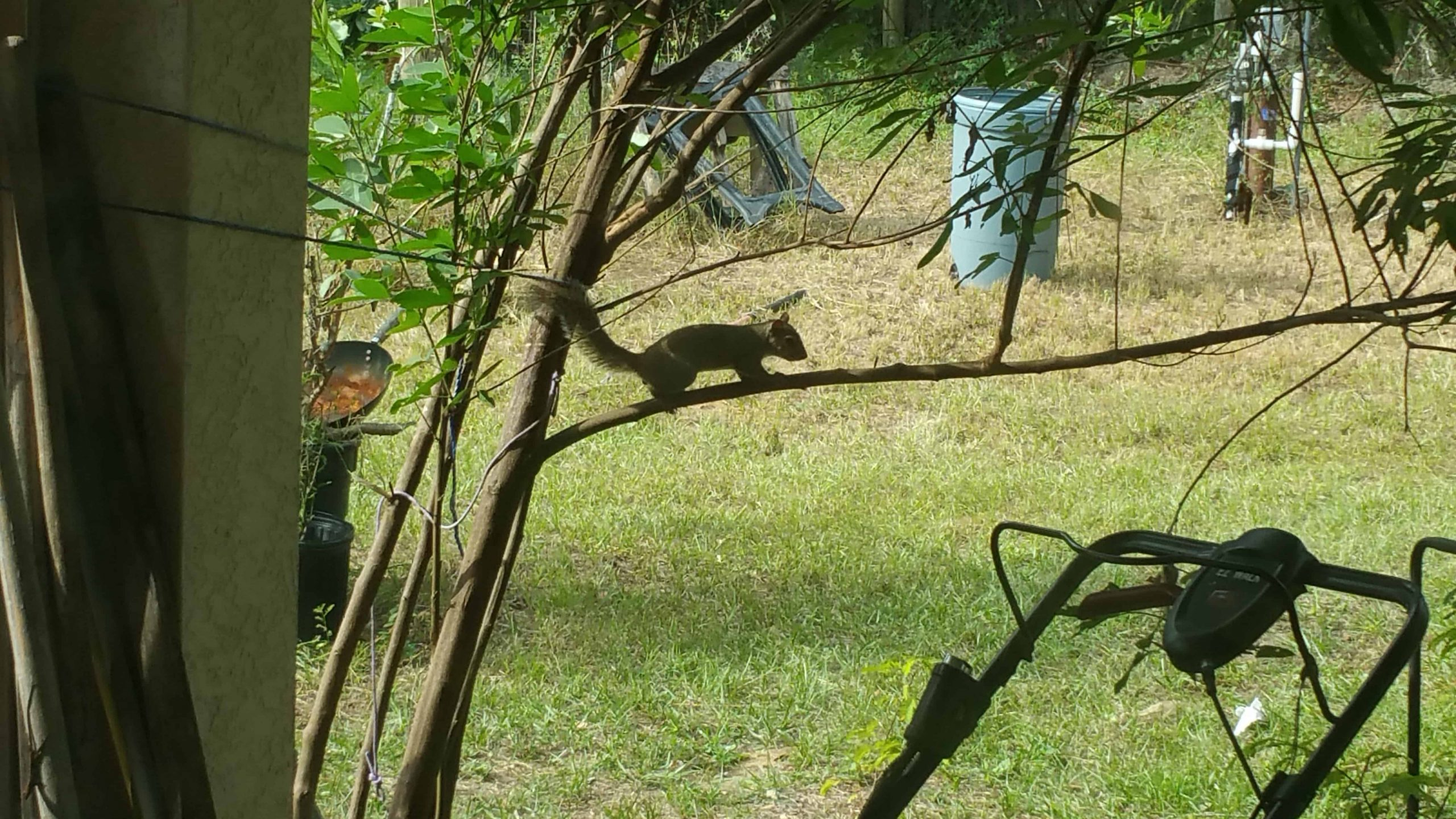 Squirrel - December 6, 2017 - 9
