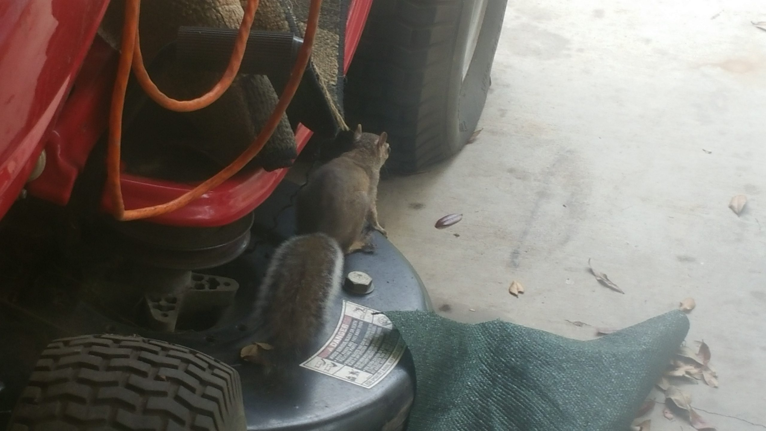 Squirrel - Feb 11, 2018 - 15