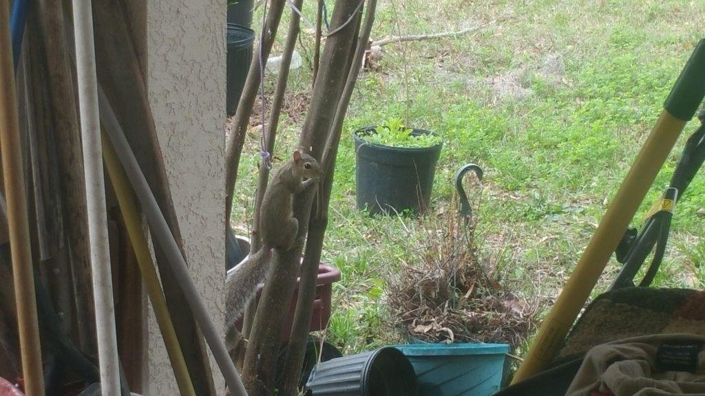 Squirrel - Feb 11, 2018 - 17