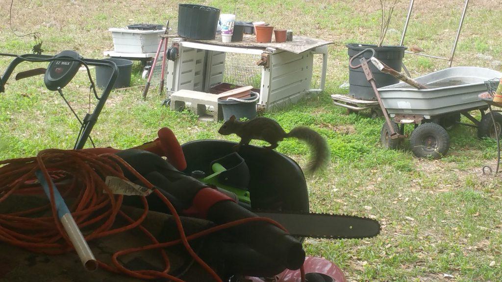 Squirrel - Feb 11, 2018 - 2