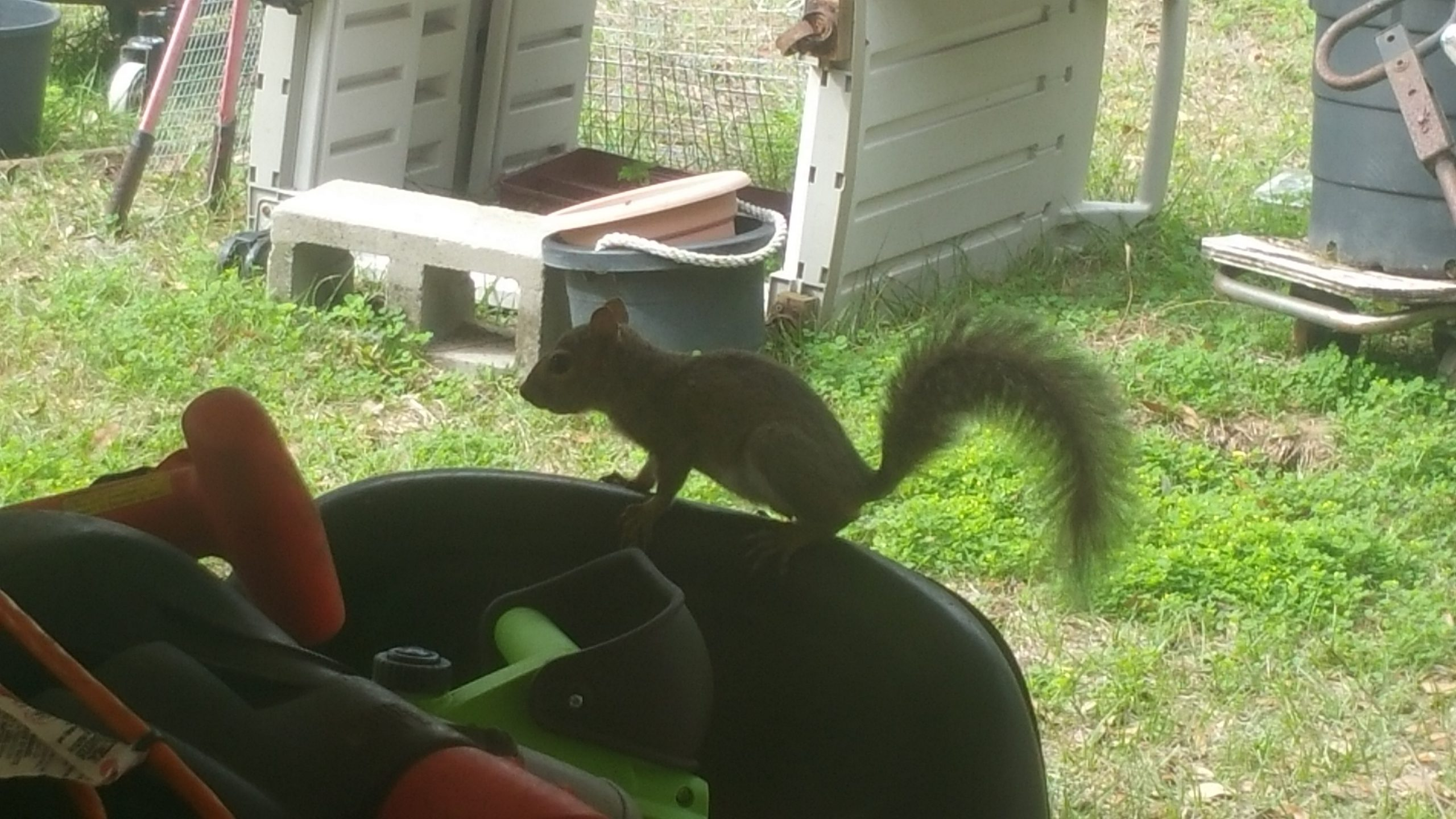 Squirrel - Feb 11, 2018 - 3
