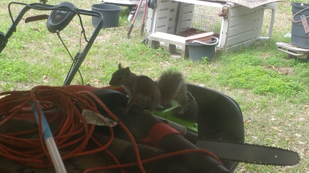 Squirrel - Feb 11, 2018 - 7