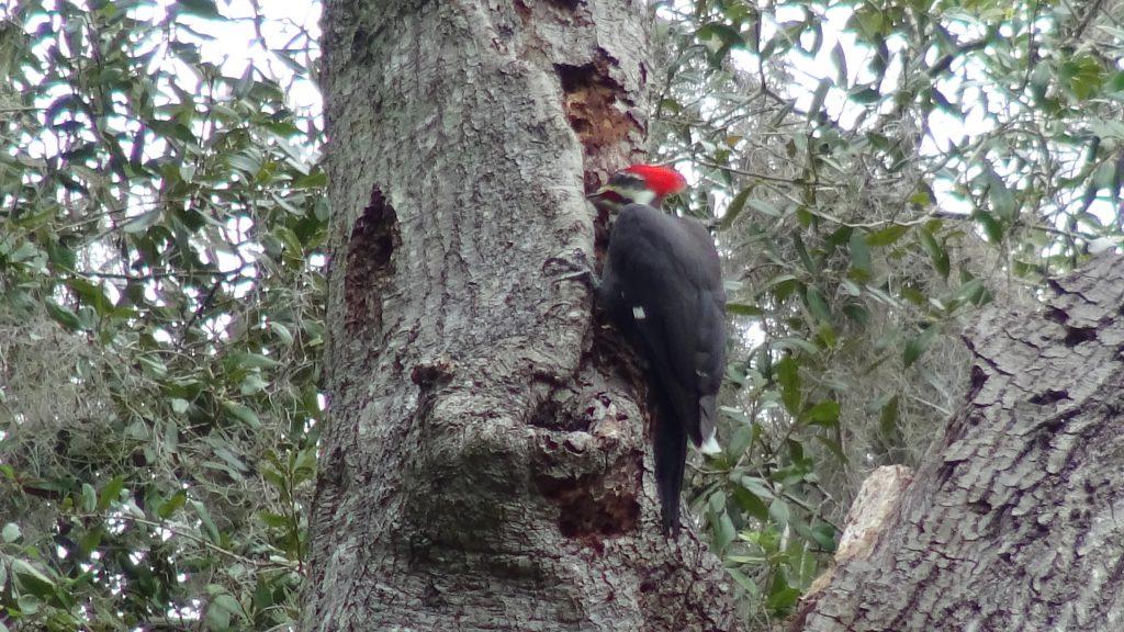 Woodpecker - 10