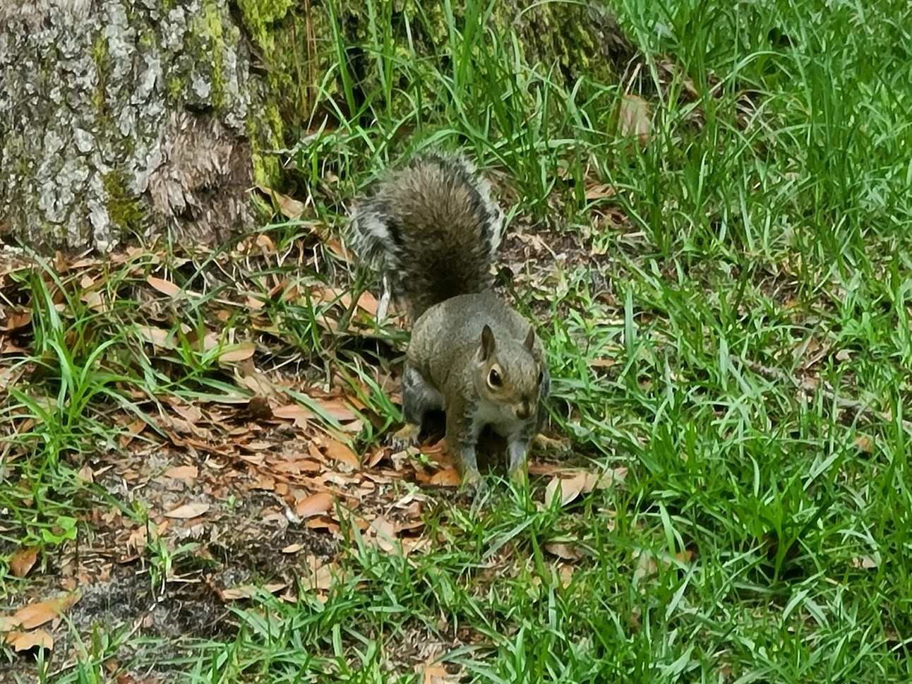 Squirrel - April 24, 2020 - 1