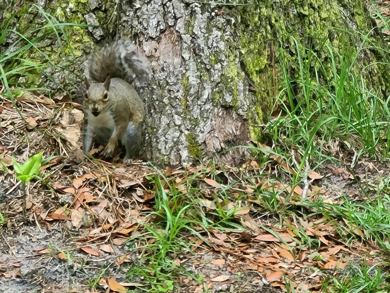 Squirrel - April 24, 2020 - 3