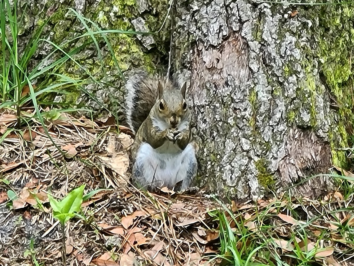 Squirrel - April 24, 2020 - 7
