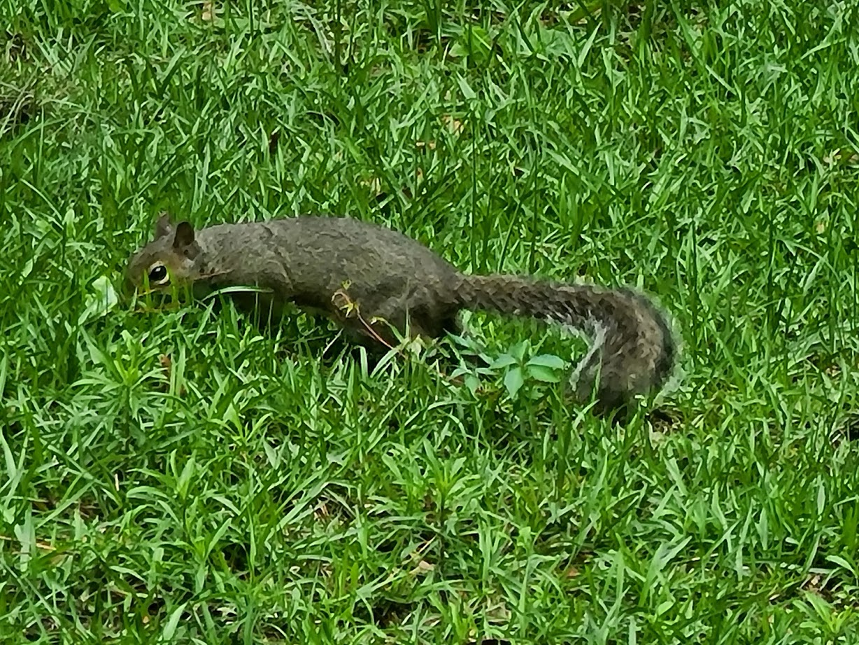 Squirrel - April 24, 2020 - 9