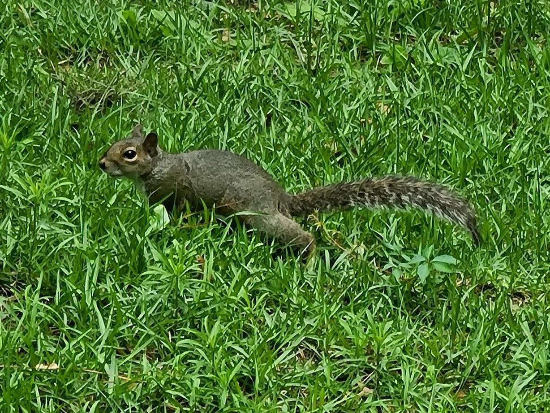 Squirrel - April 24, 2020 - 10