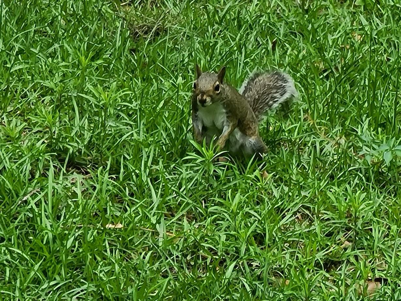 Squirrel - April 24, 2020 - 14