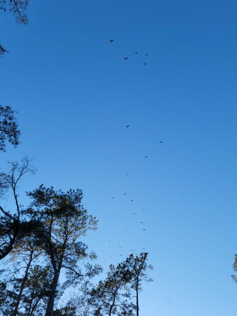 Birds 2021-02-24 1