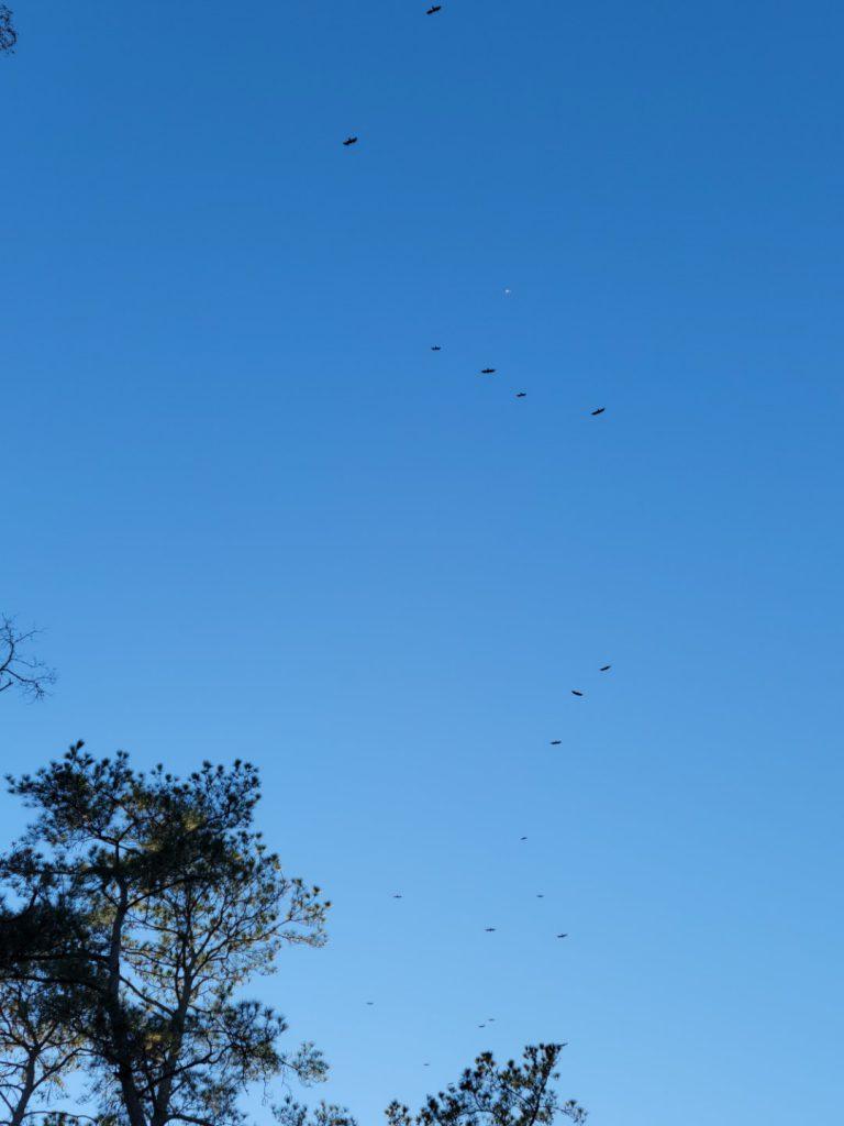 Birds 2021-02-24 2
