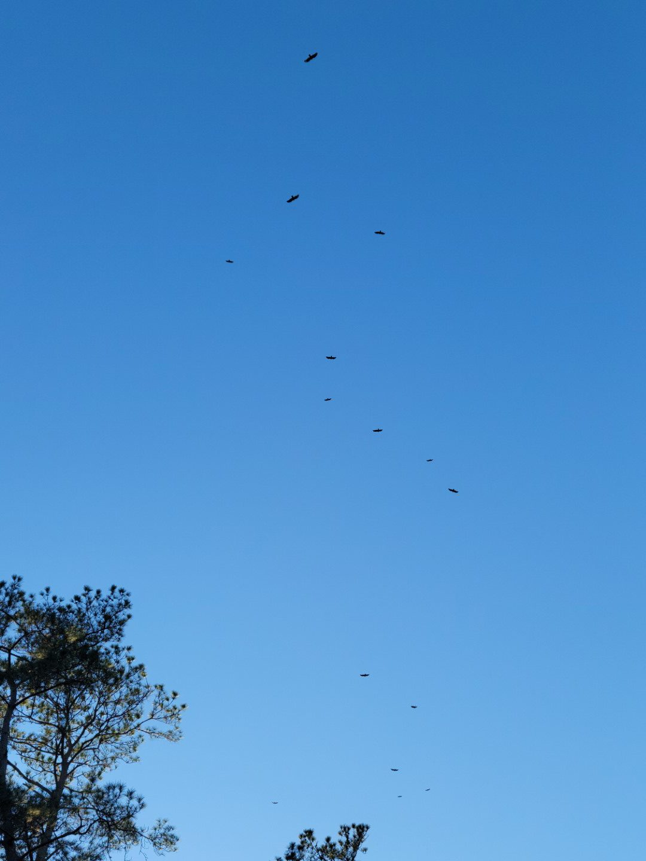 Birds 2021-02-24 4
