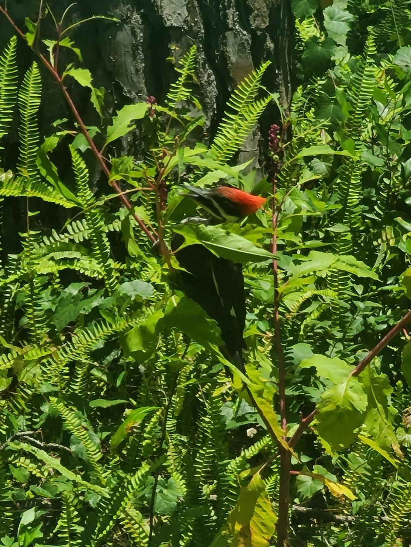 Woodpecker 2020-06 - 06