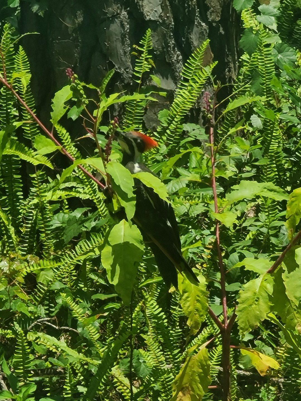 Woodpecker 2020-06 - 09