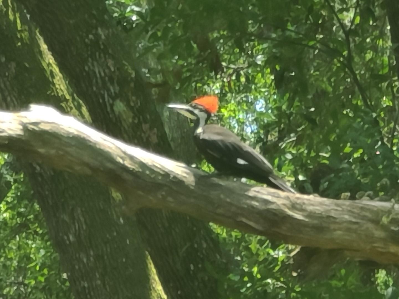 Woodpecker 2020-06 - 11