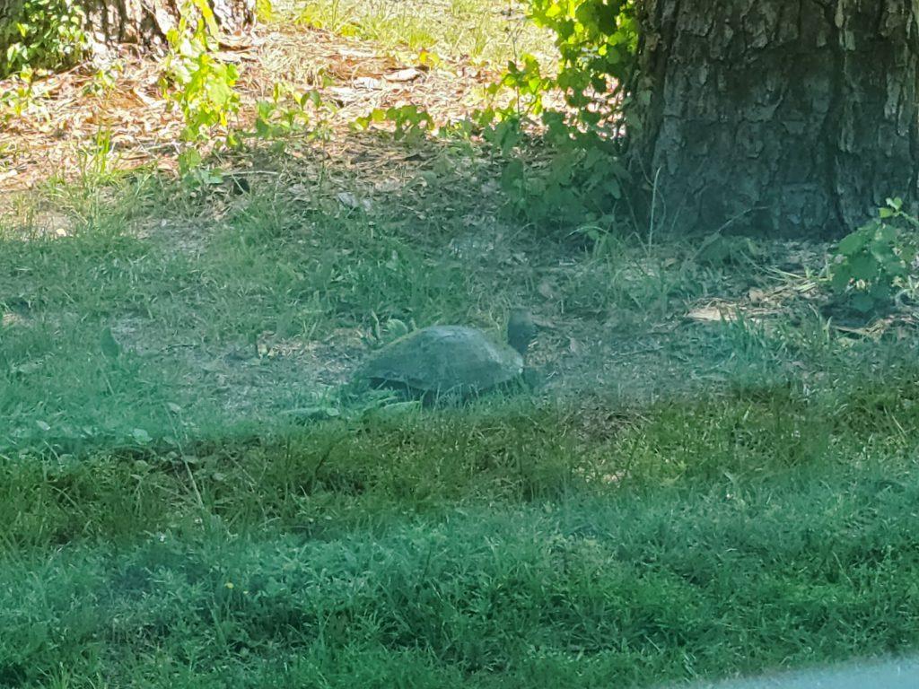 Turtle 2020-05-19 5