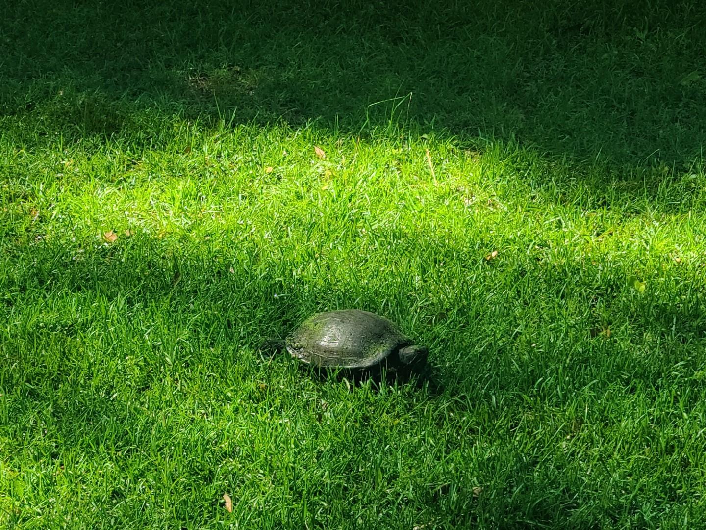 Turtle 2020-05-19 7