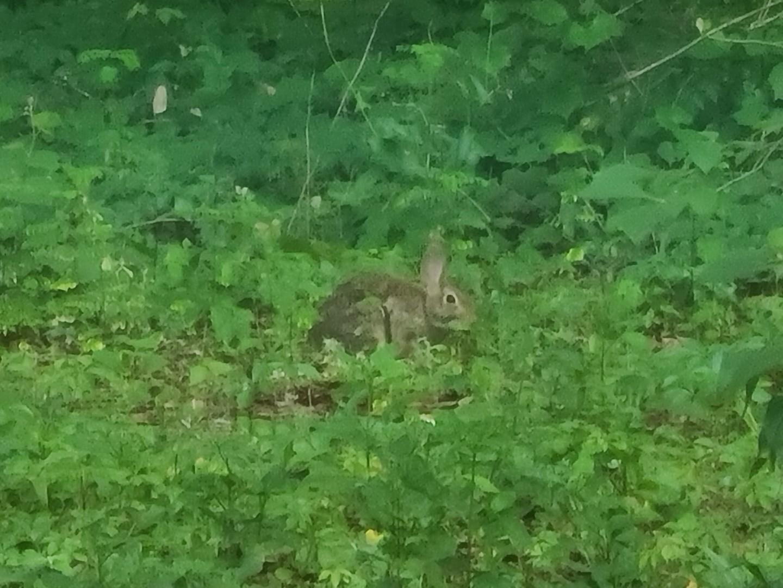 Bunny 2020-06-08 1