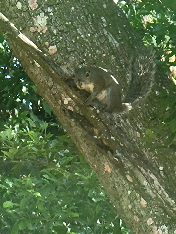Squirrel June 1st, 2021 2