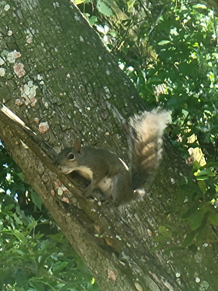 Squirrel June 1st, 2021 3