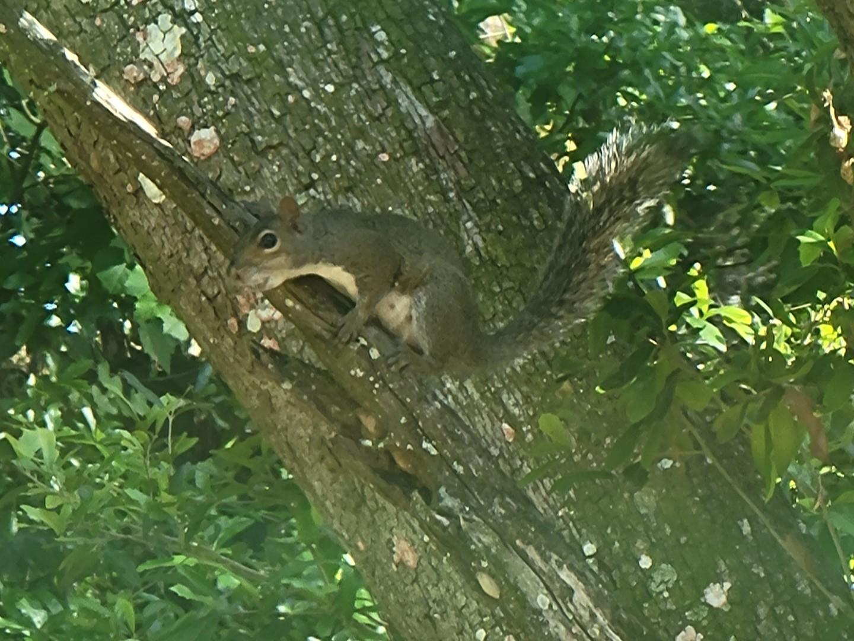 Squirrel June 1st, 2021 1